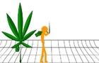 Truth about Marijuana